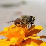 KRÁSNÉ fotky přírody, rostlin a zvířátek